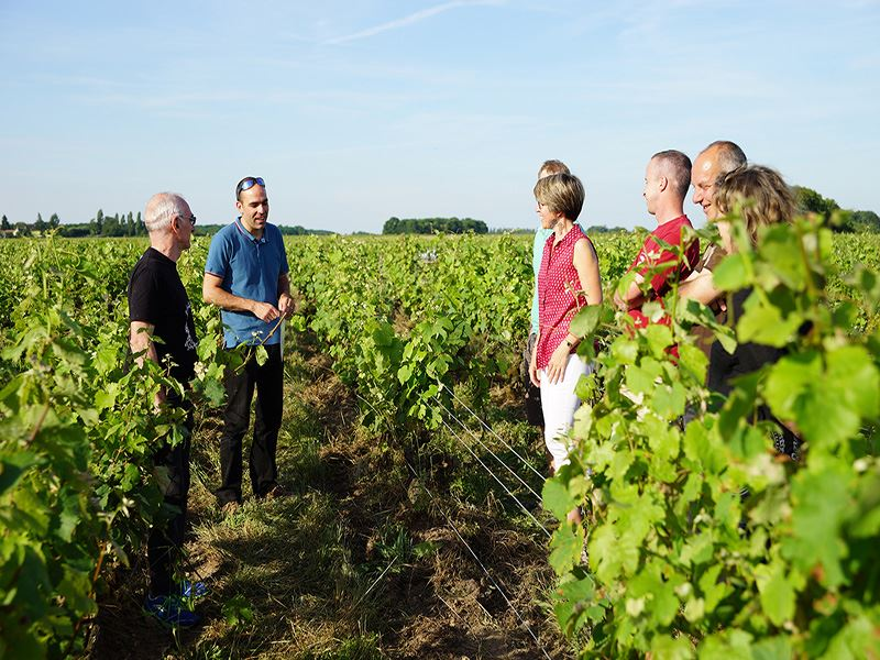 GUIDED WINE TOUR WITH VINOLOIRE - MORNING VOUVRAY MONTLOUIS