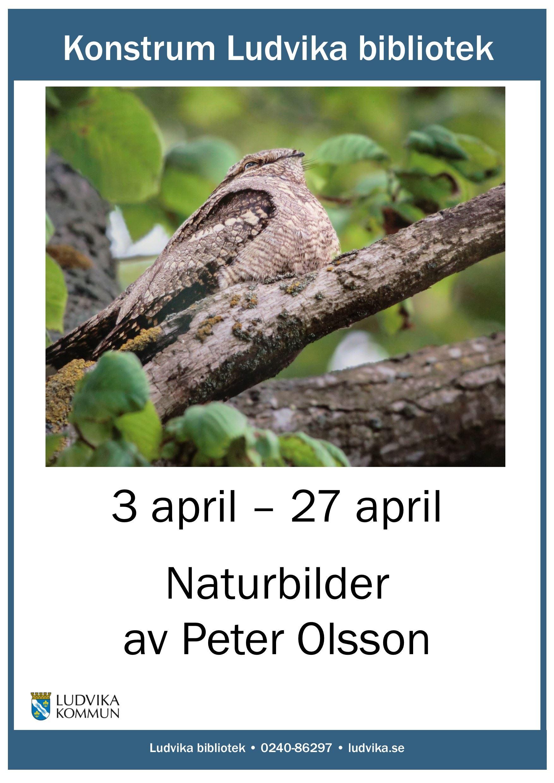 Utställning Naturbilder av Peter Olsson