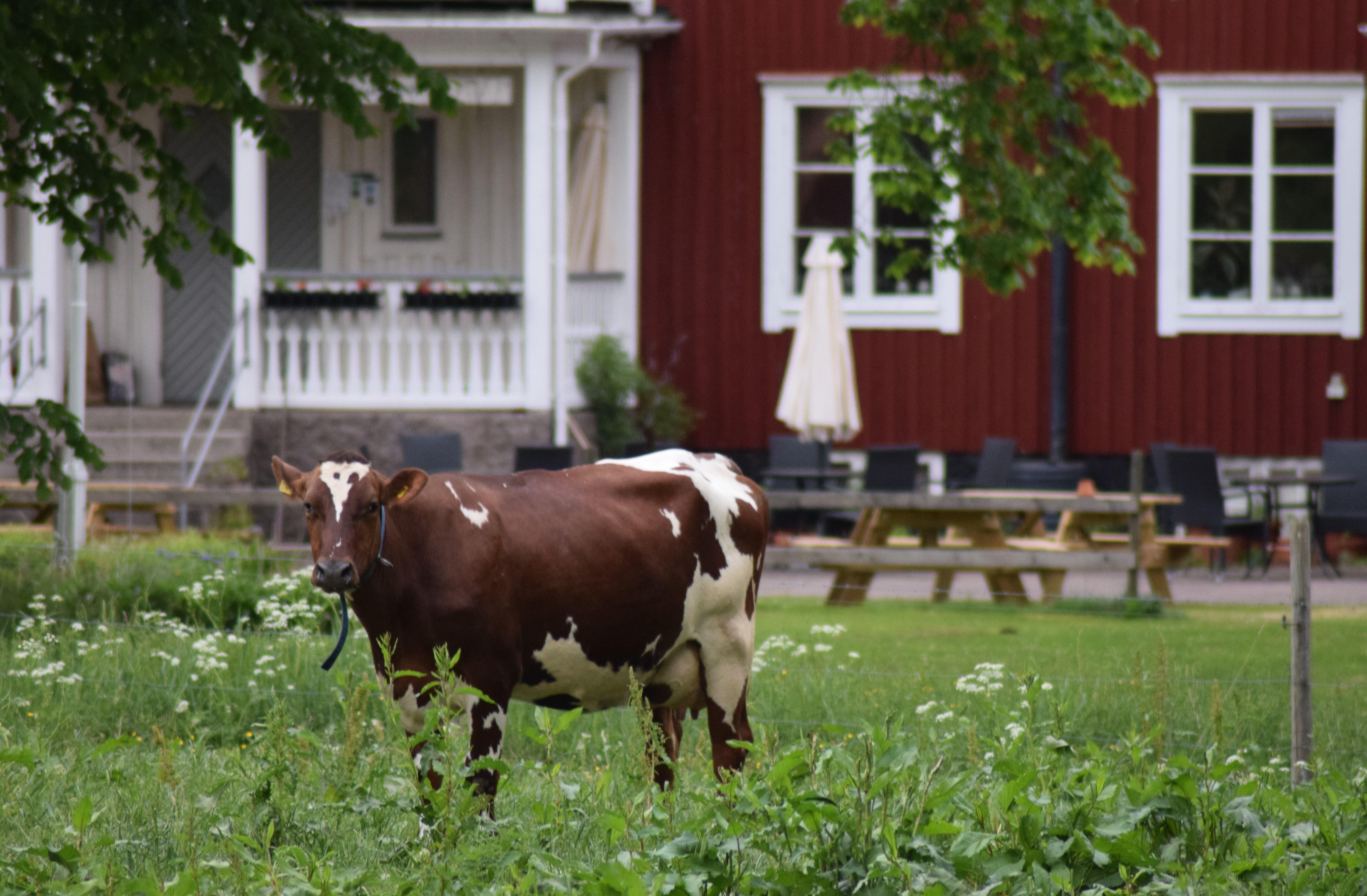 Vidinge Gård - Hostel