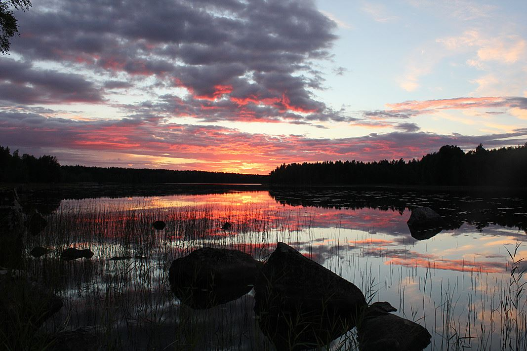 Summer night's silence nature excursion | Best Lake Nature Adventures