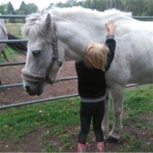 Hästrundan - Prova på ridning med islandshästar och se på Aegidenbergerföl