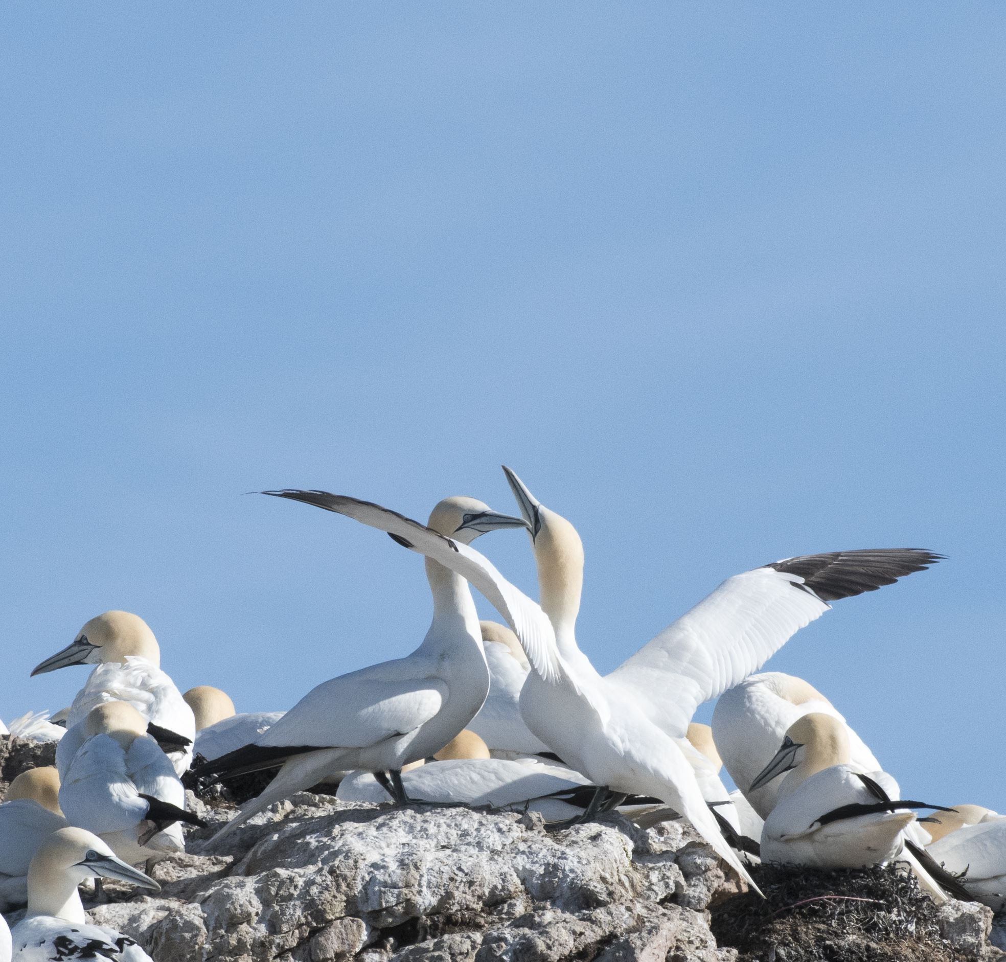 Bird Watching with Puffins, Eagles and Gannets