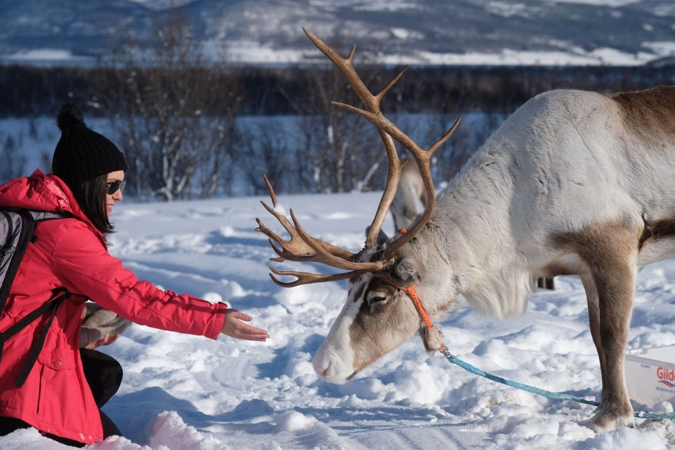 Reindeer Sledding & Sami Culture
