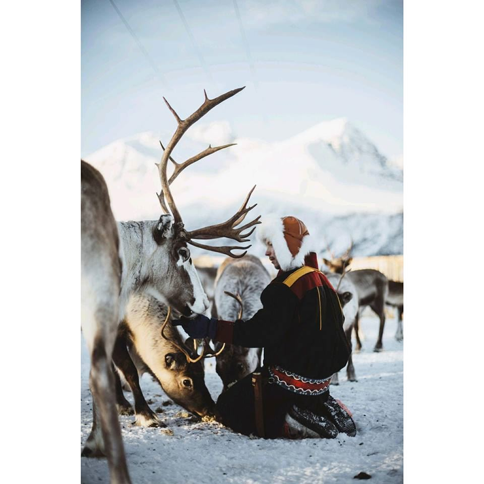 Sami Experience with reindeer feeding