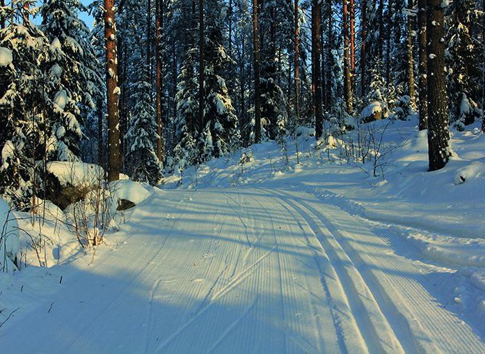 Treasures of winter