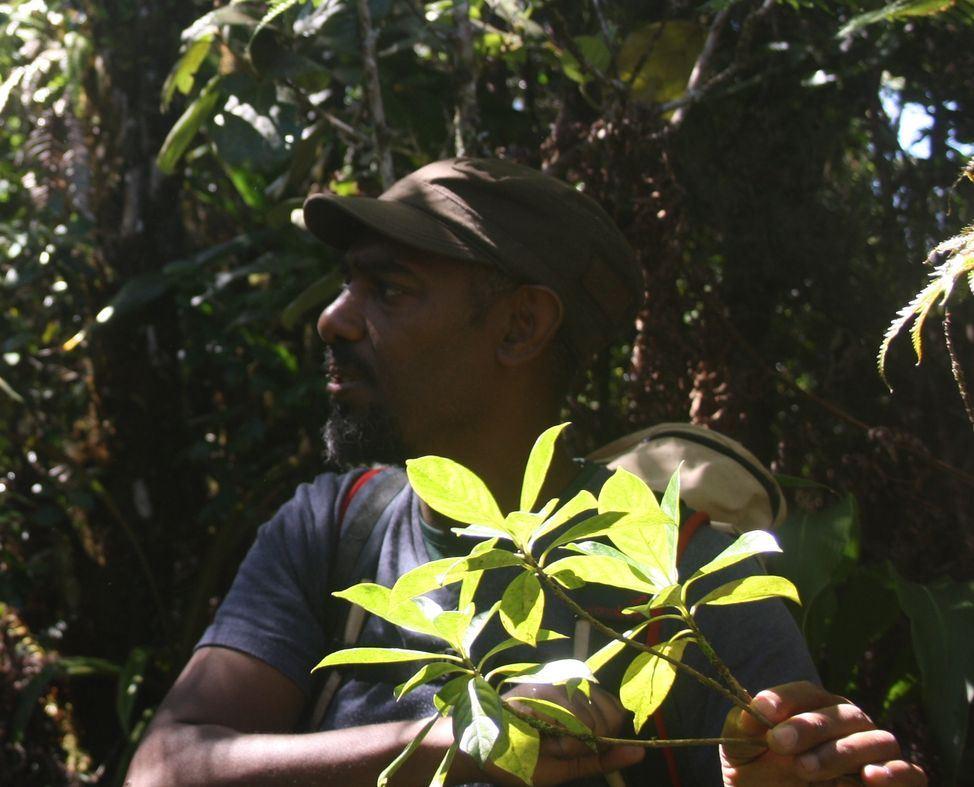 Au fil des Cases Créoles à La Plaine des Palmistes