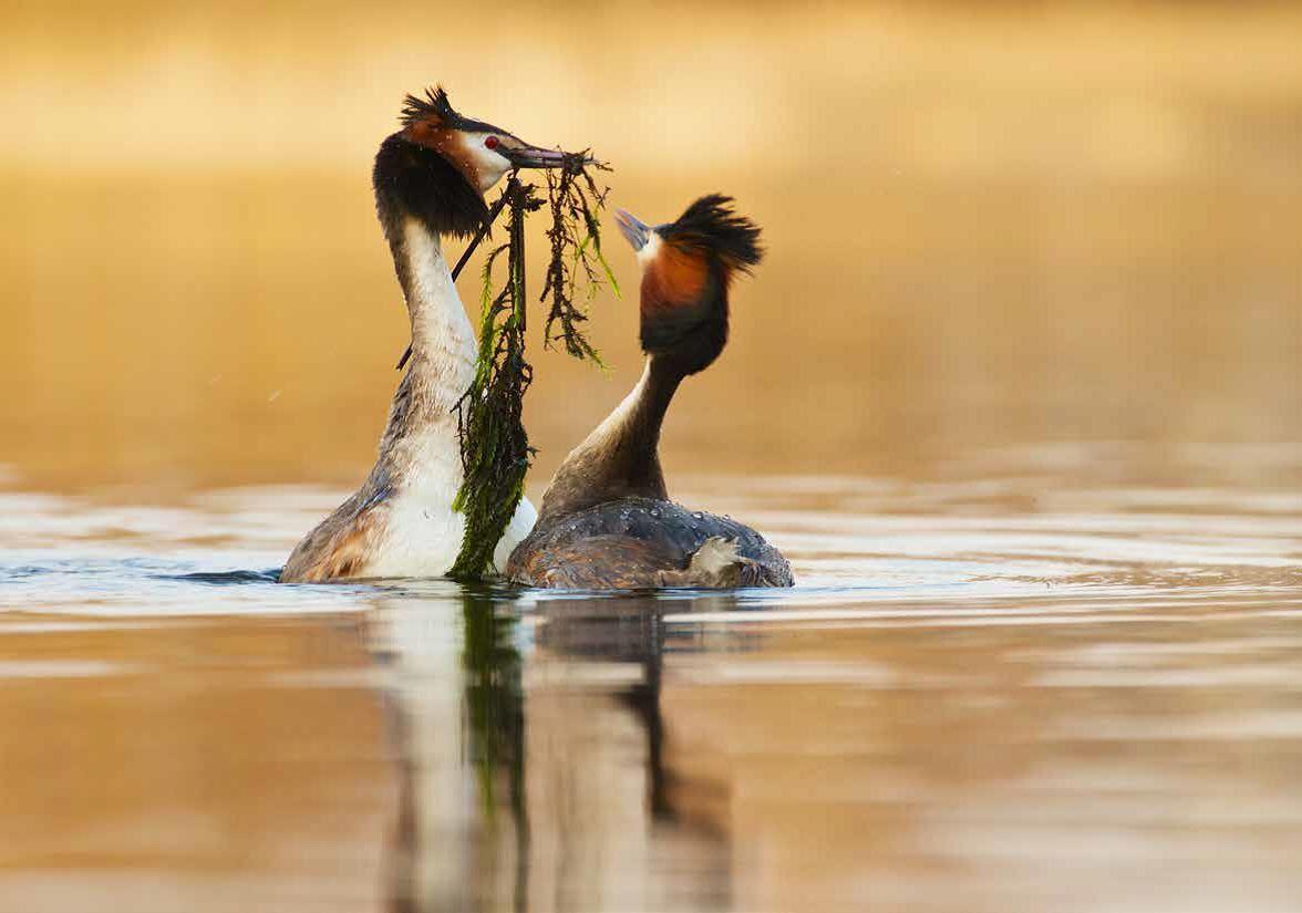 Fotoutställning -  Fåglar vid vatten