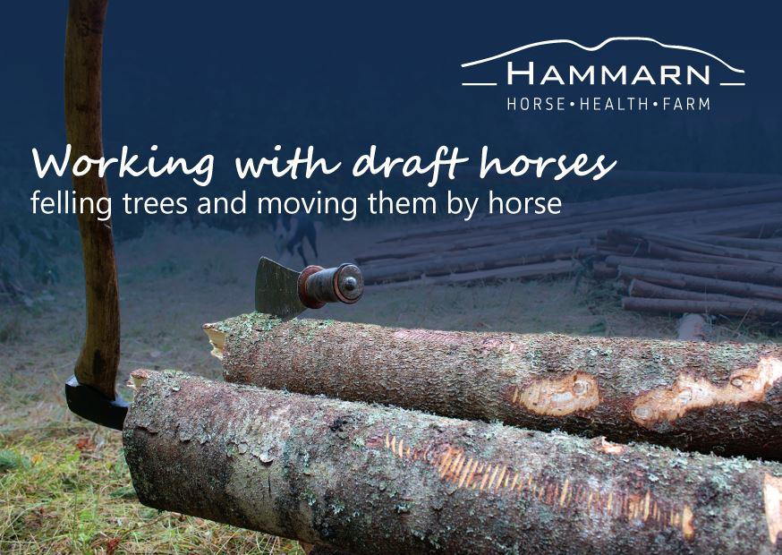 Hammarn, häst, hälsa, gård, Hassela,  © Hammarn, häst, hälsa, gård, Hassela, Hammarn, häst, hälsa, gård, Hassela