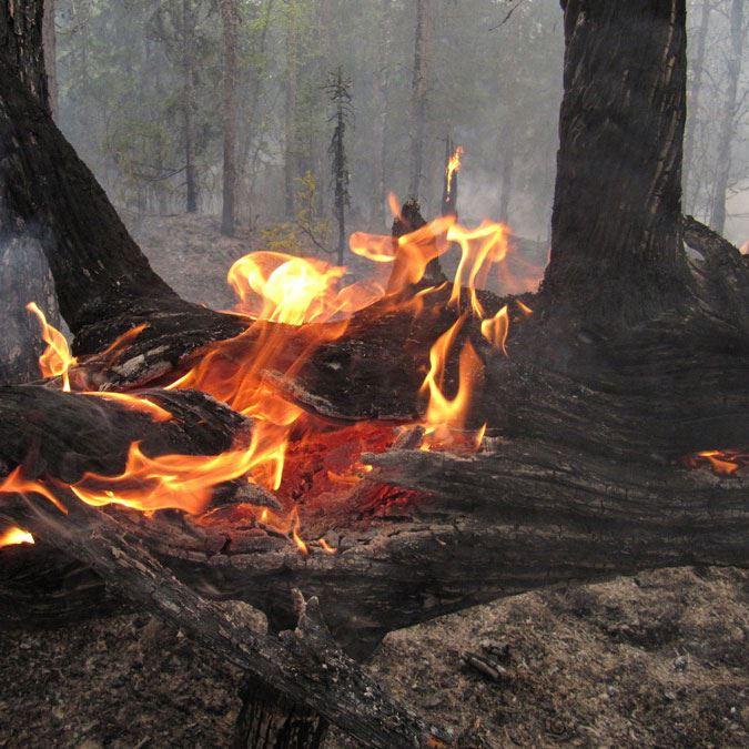Ett år efter naturvårdsbränningen - exkursion i Siljansnäs naturreservat
