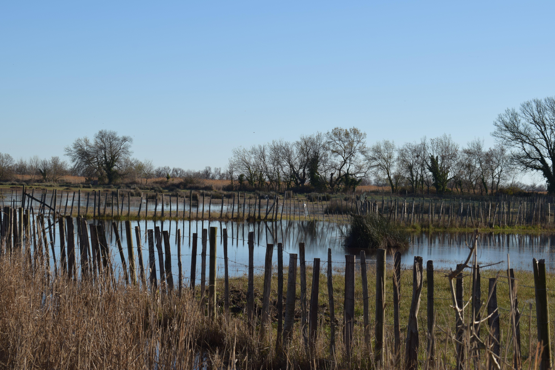 Montpellier-Lattes et Site Naturel du Méjean