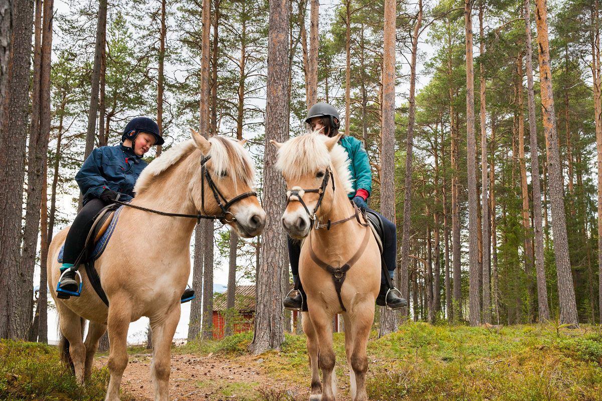 Turridning på Fjordhästar