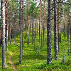 Mora Trail – Terränglopp