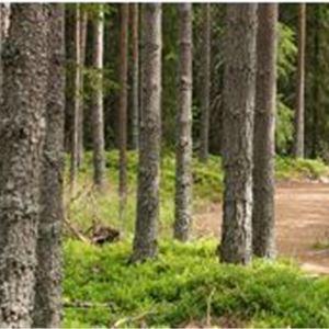 En ensam löpare på stig i skogen