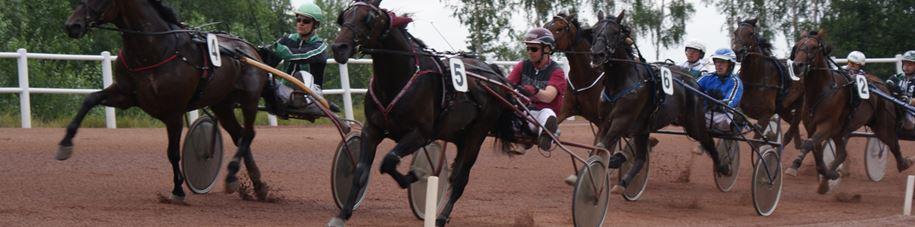 Hästsport: Islandshästar