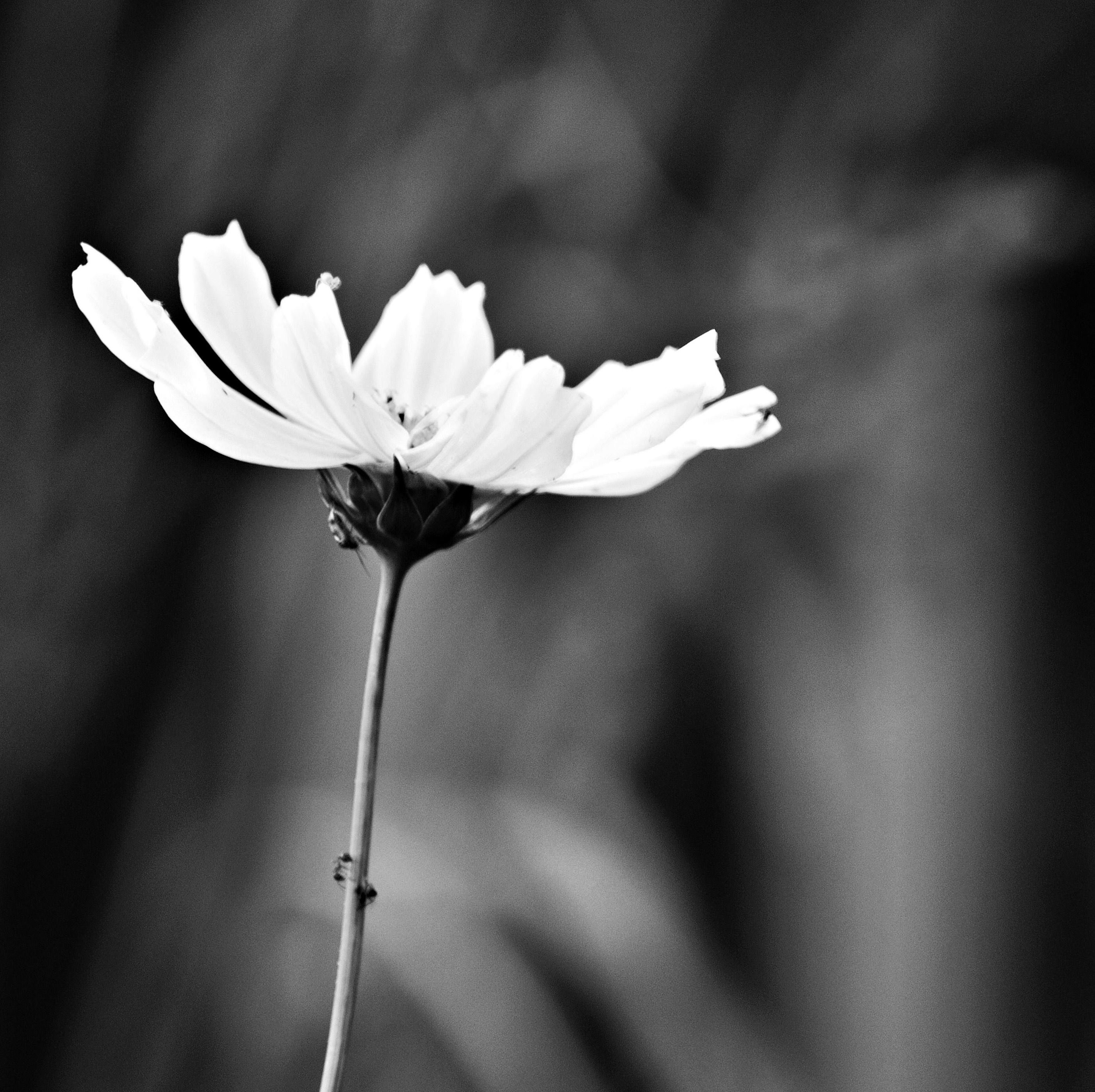 Träff för daglediga: Kåseri om blommor i vår Herres hage