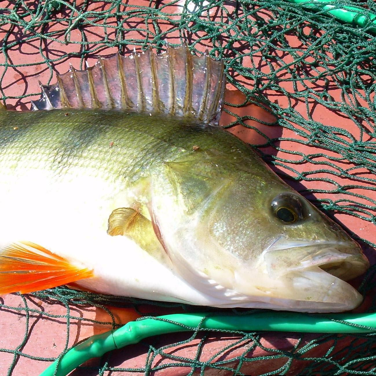 Fiskekort Bäsinge Fiskevårdområde