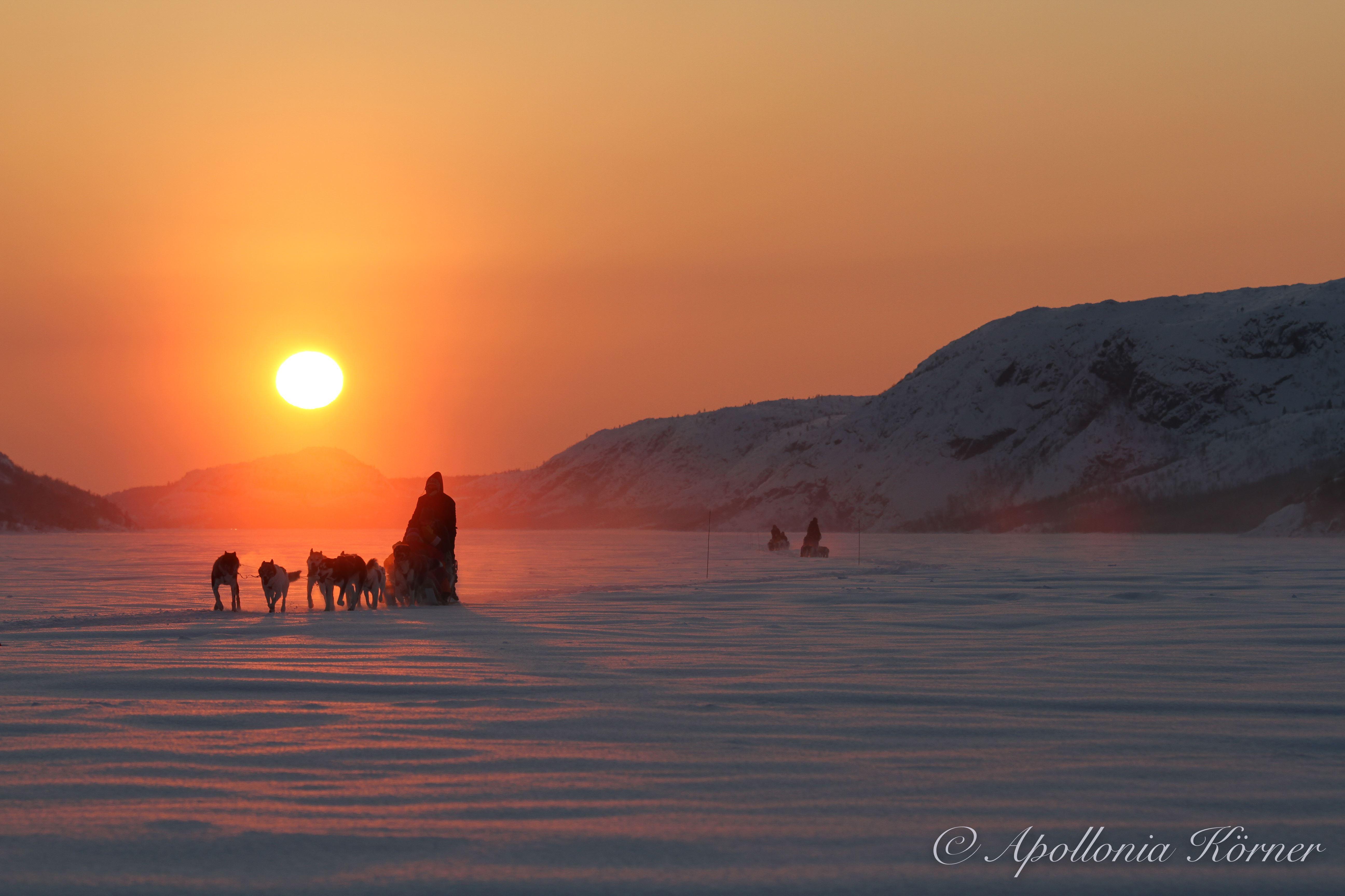 © Snowhotel Kirkenes, Snowhotel Kirkenes - Husky safari 2 hours