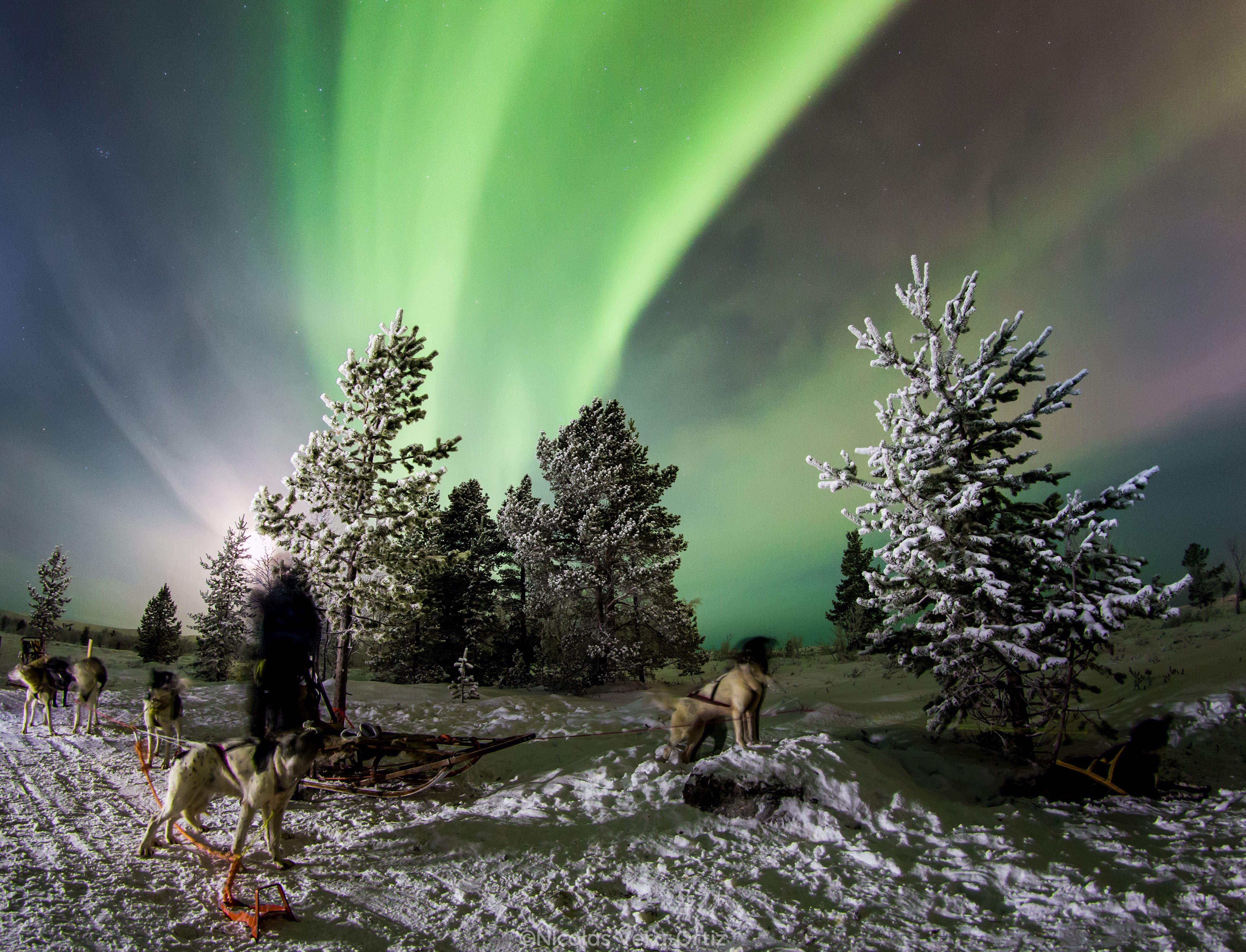 © Snowhotel Kirkenes, SnowHotel Kirkenes - Hunting northern lights with Husky