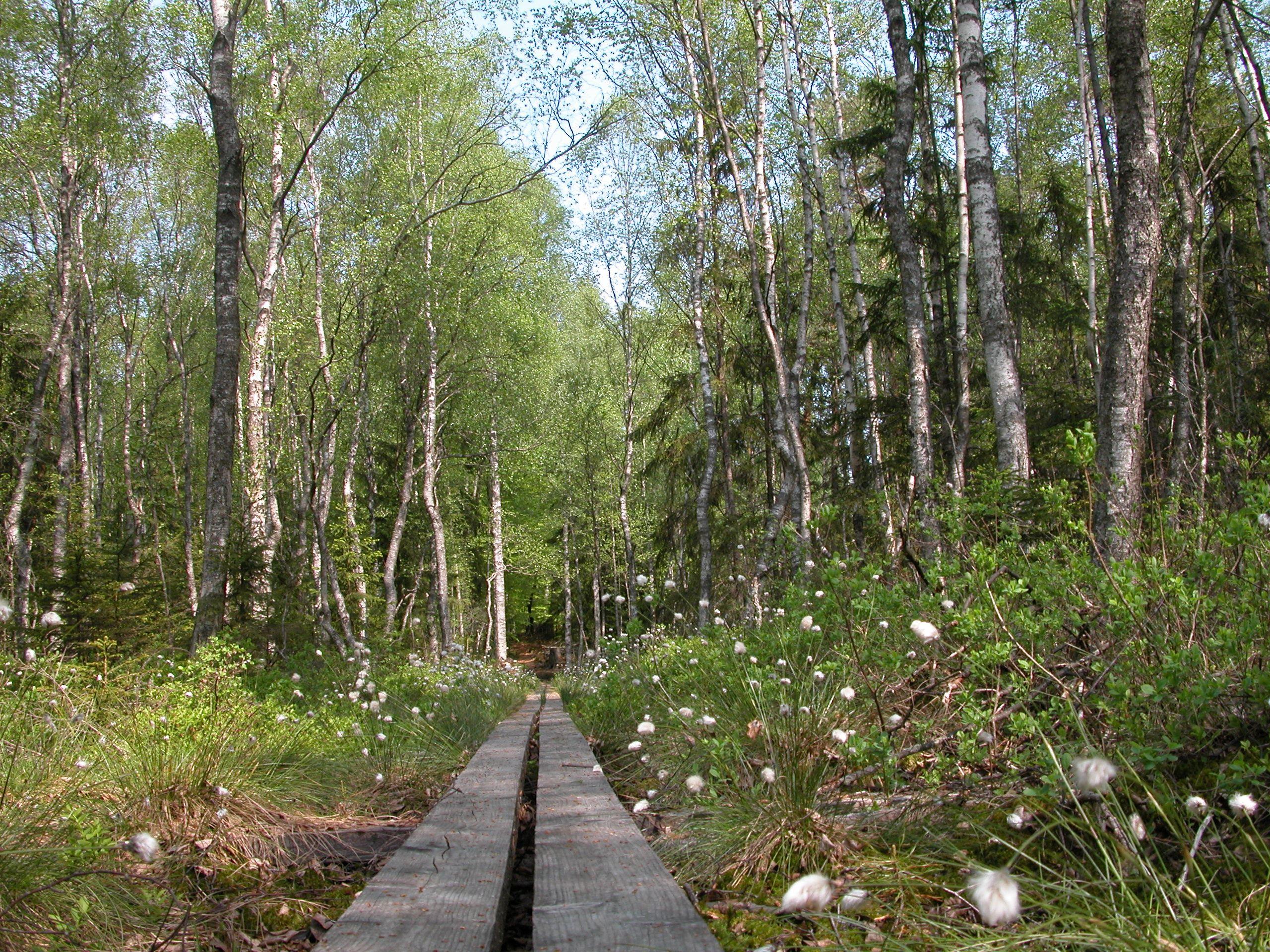 Bird walk at Vakö myr