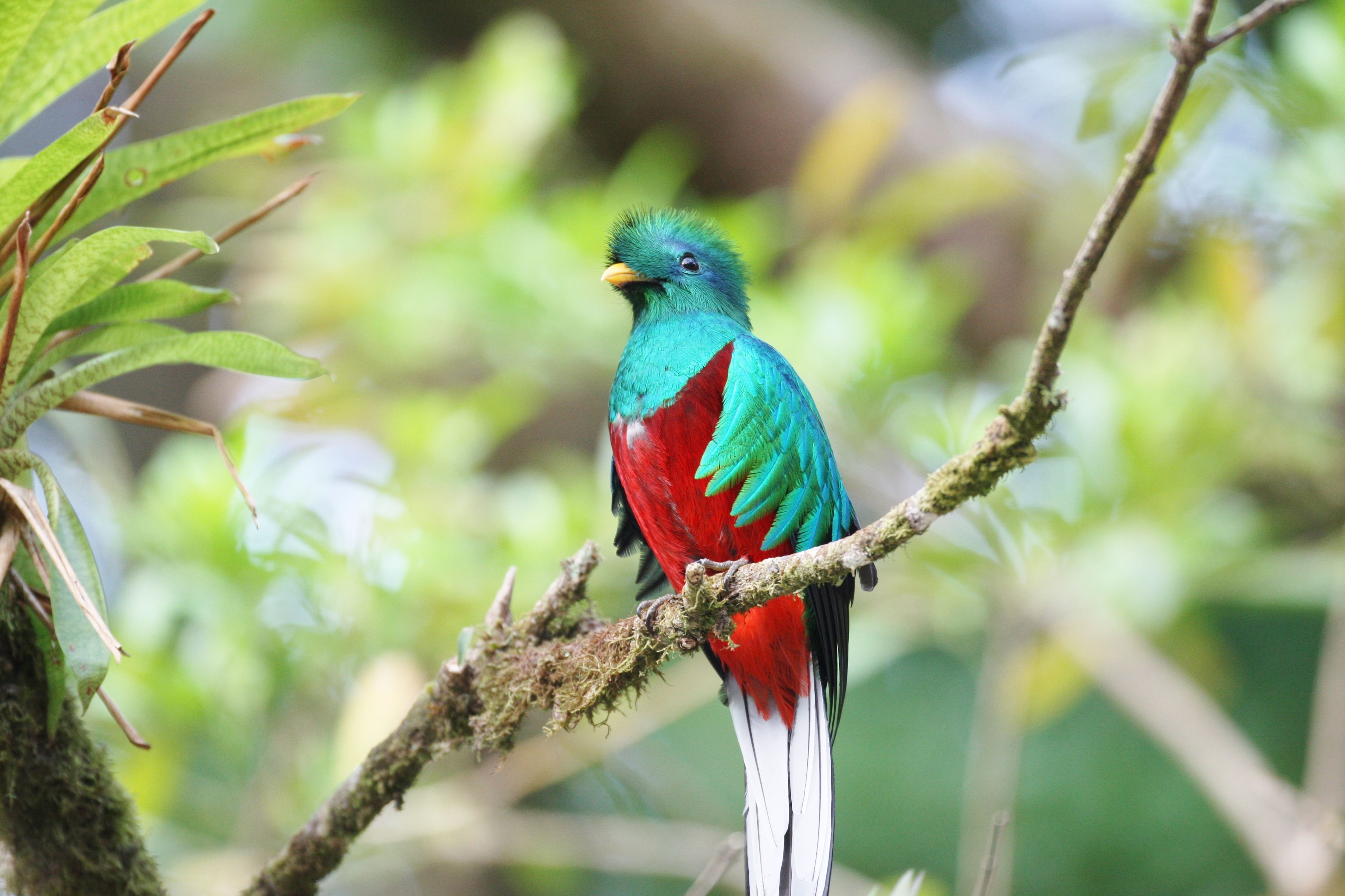 The Path of the Quetzals