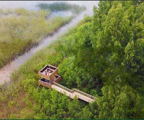 Sammalsillansuo swamp