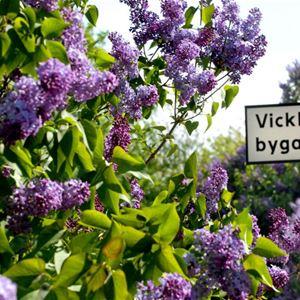 STF Vickleby/Bo pensionat