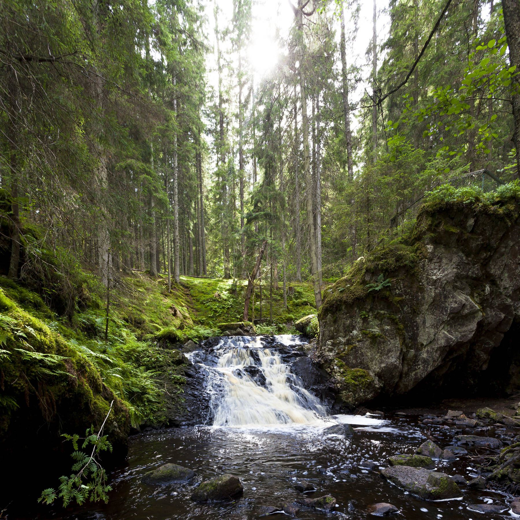 Naturreservat Kronoberg