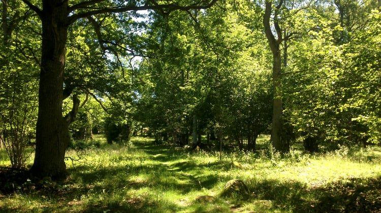 Naturschutzgebiet Sjösås Äng