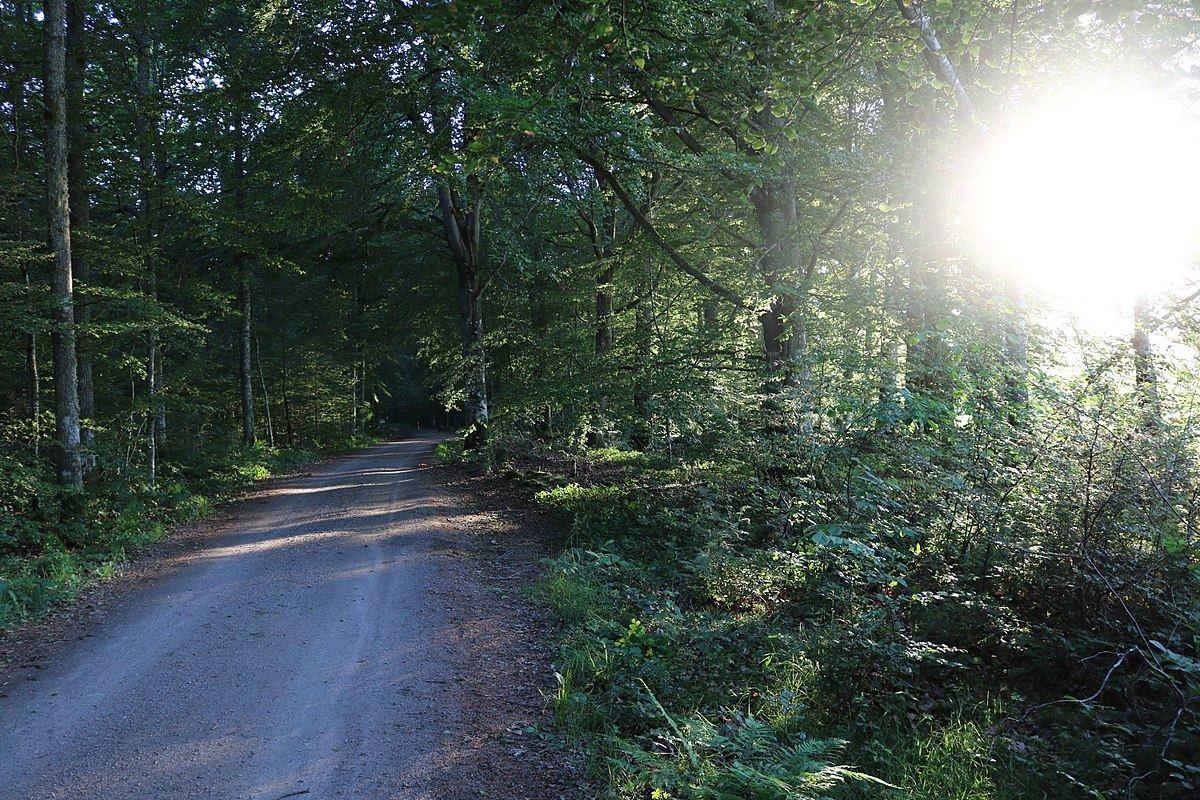 Nature reserve Kronoberg