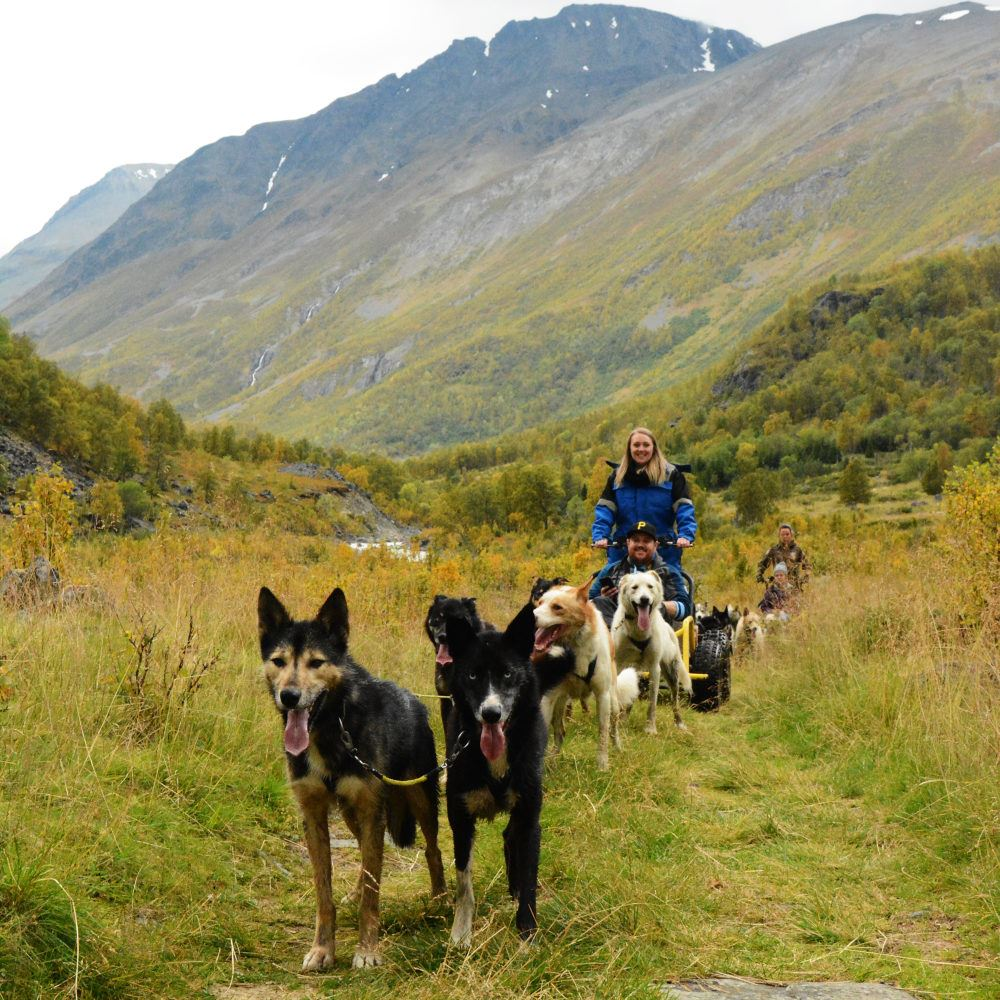Autumn dogsledding with carts