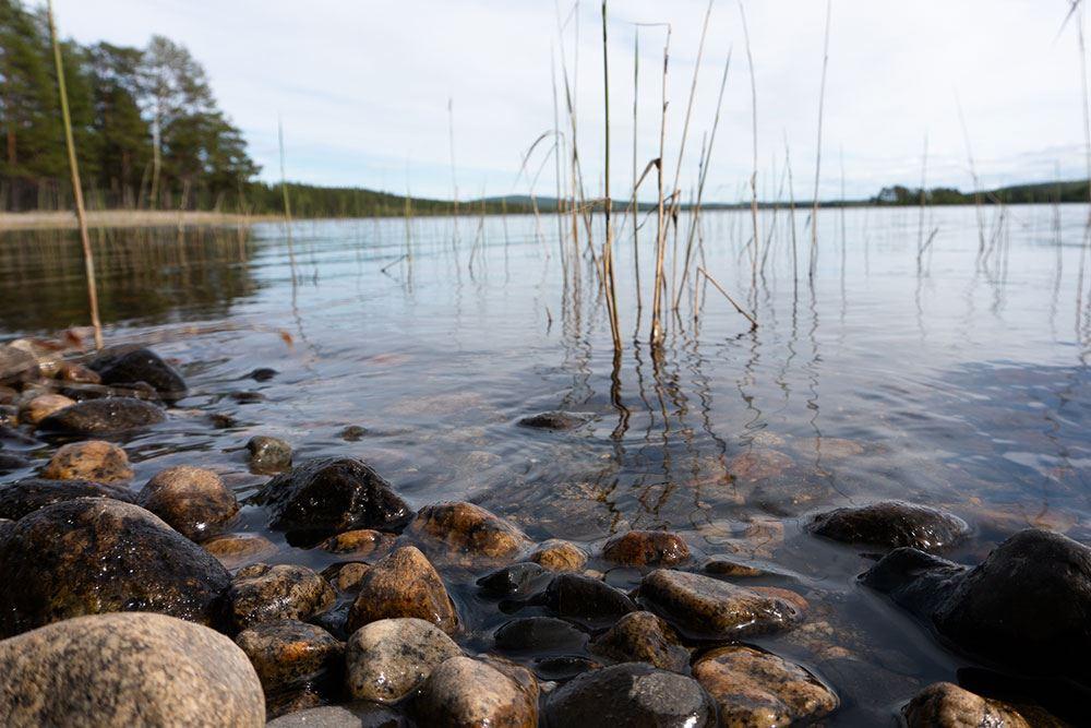 Tärna/Stensele Allmänningsskog