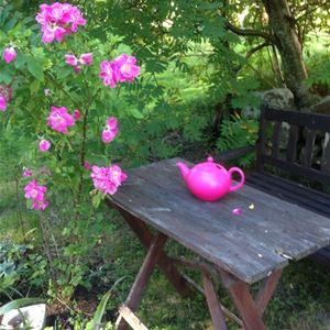 Bord i rosenträdgård.