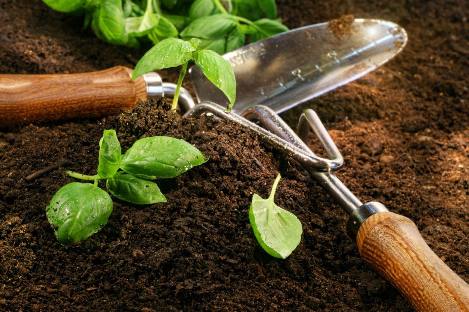 Att odla hälsa