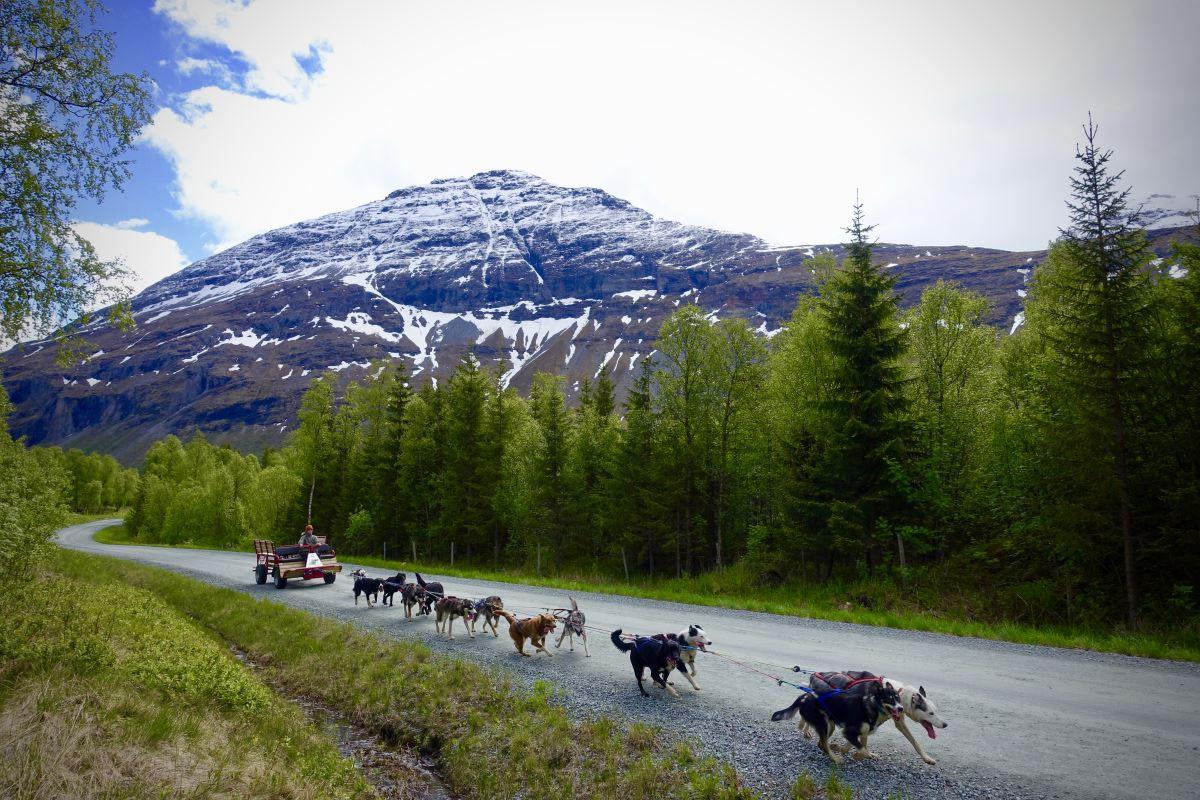 Signaldalen rundt - Bergbjørn Fjellservice