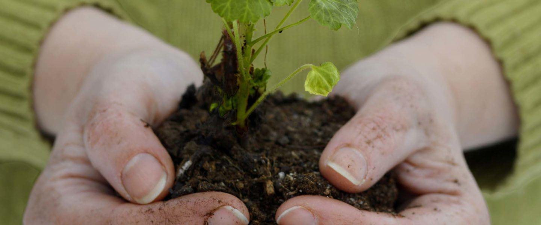 © Jamtli, Händer håller i jord med en växt