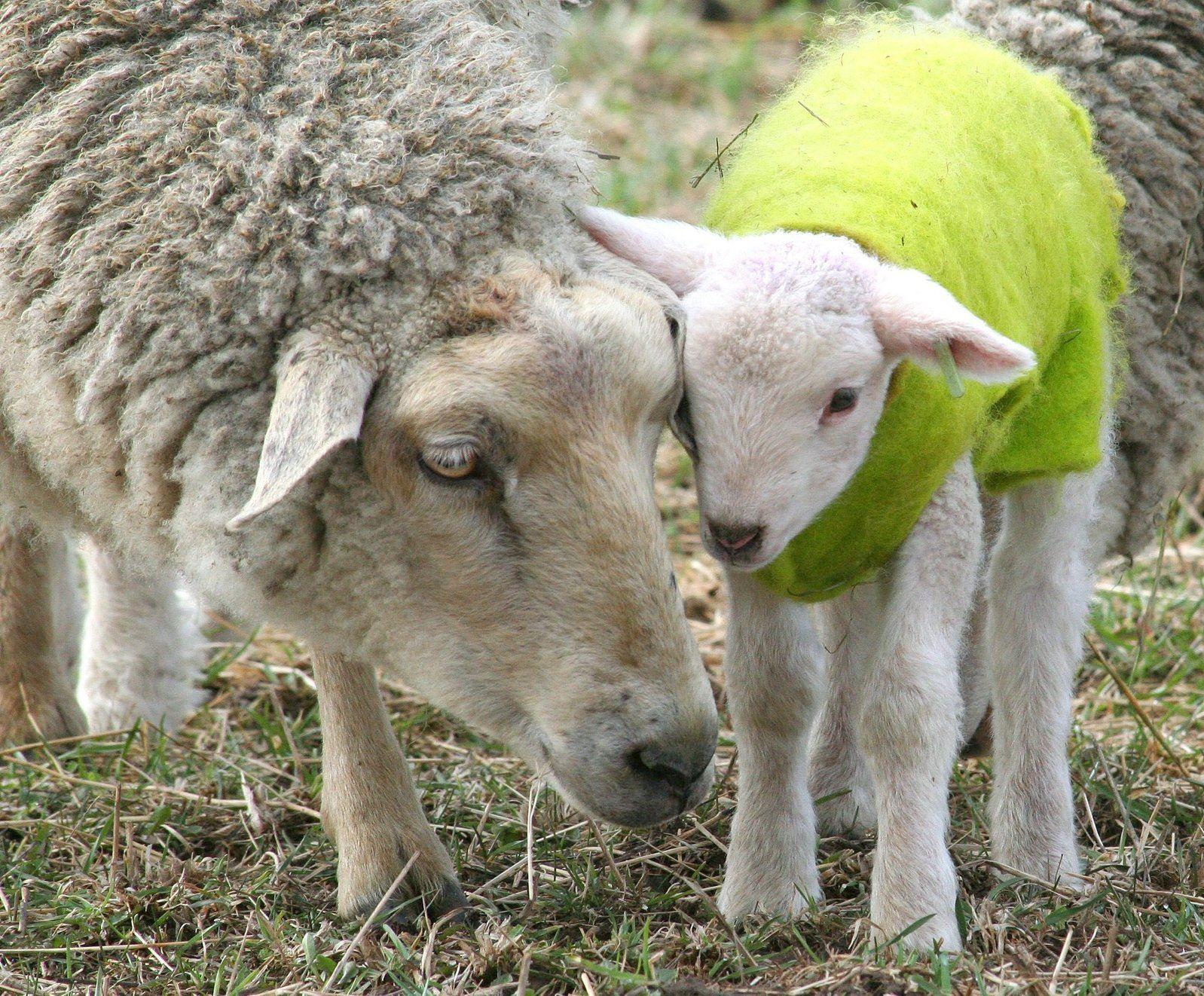 Sheep shop