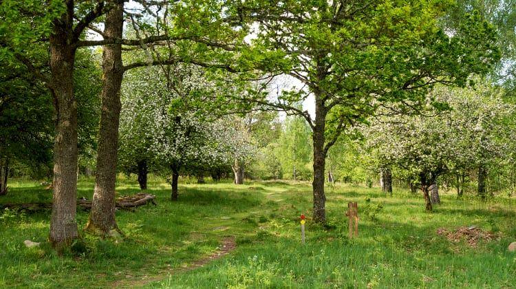 Tobias Ivarsson, Nature reserve Teleborg