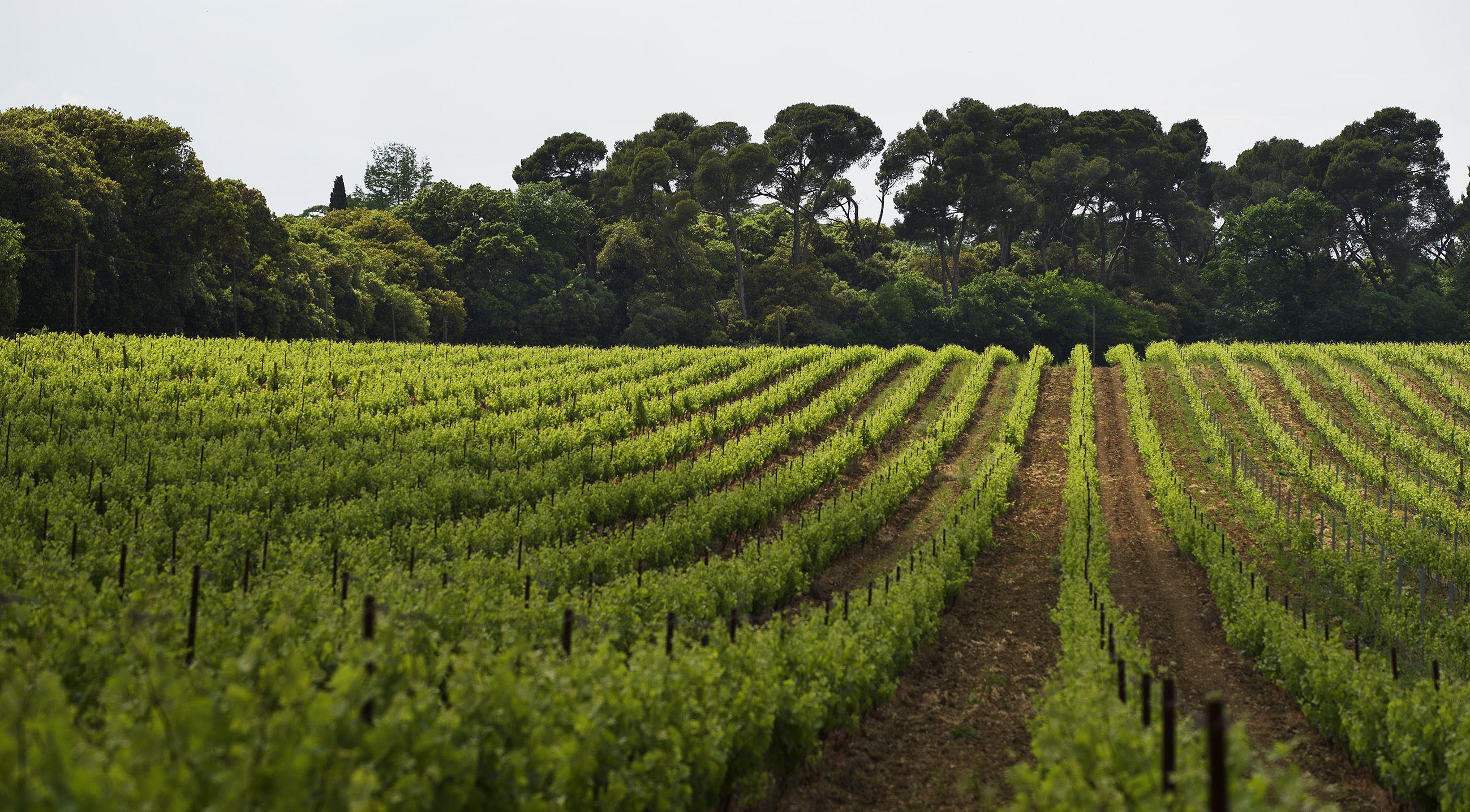 Dégustation des vins - Château de Serres