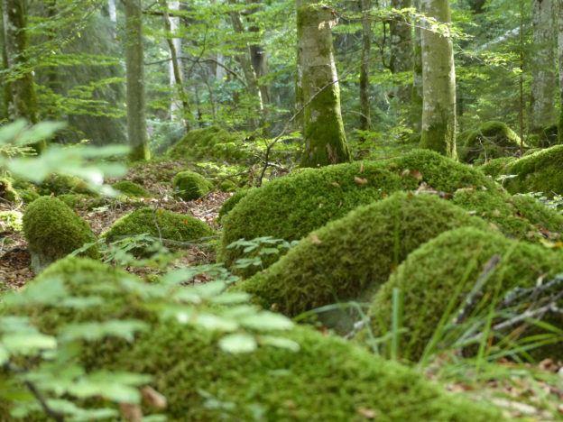 Gunilla Lindbladh, National park Åsnen