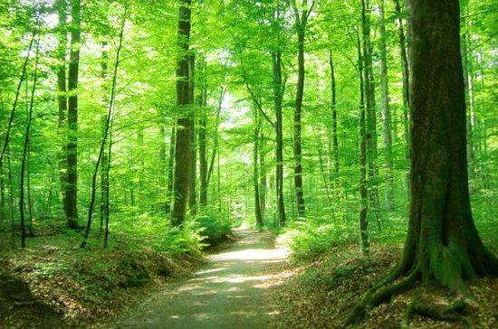 Naturreservat Gårdsby och Hemmesjö Bökeskog