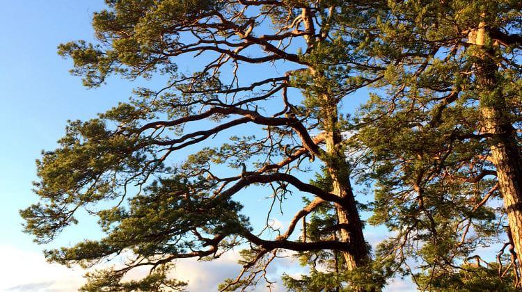 Nature reserve Jägaregap