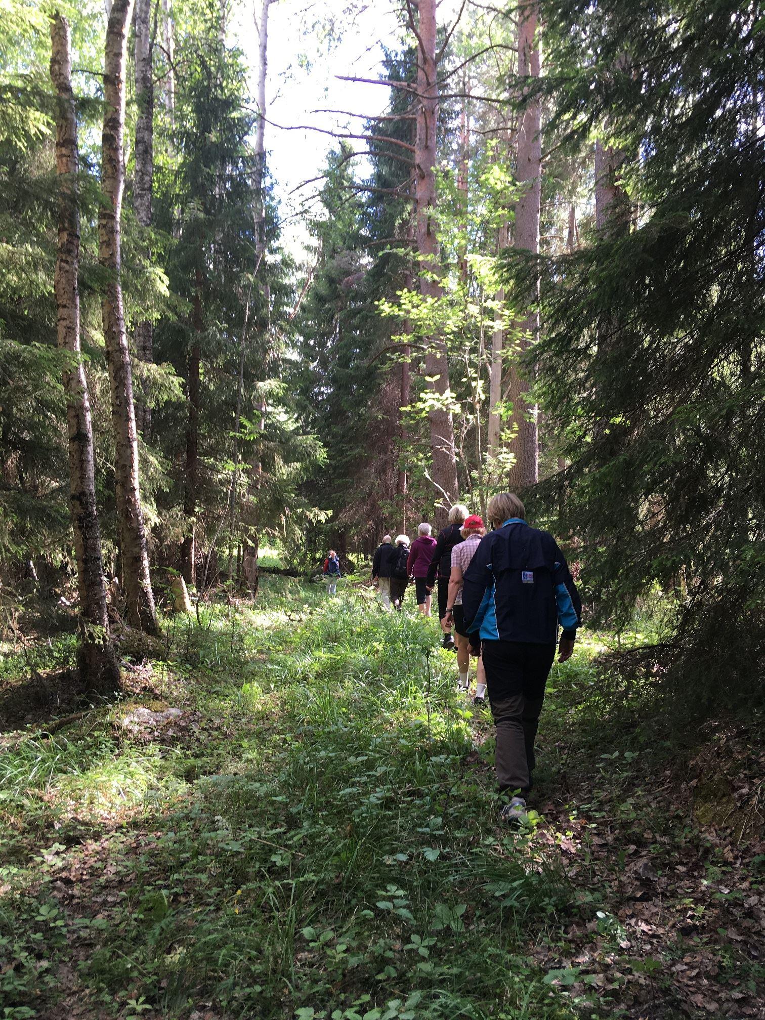 Vandring i Helgonens fotspår längs S:t Olavsleden