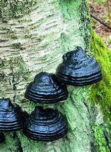 Naturreservat Kronoskogen