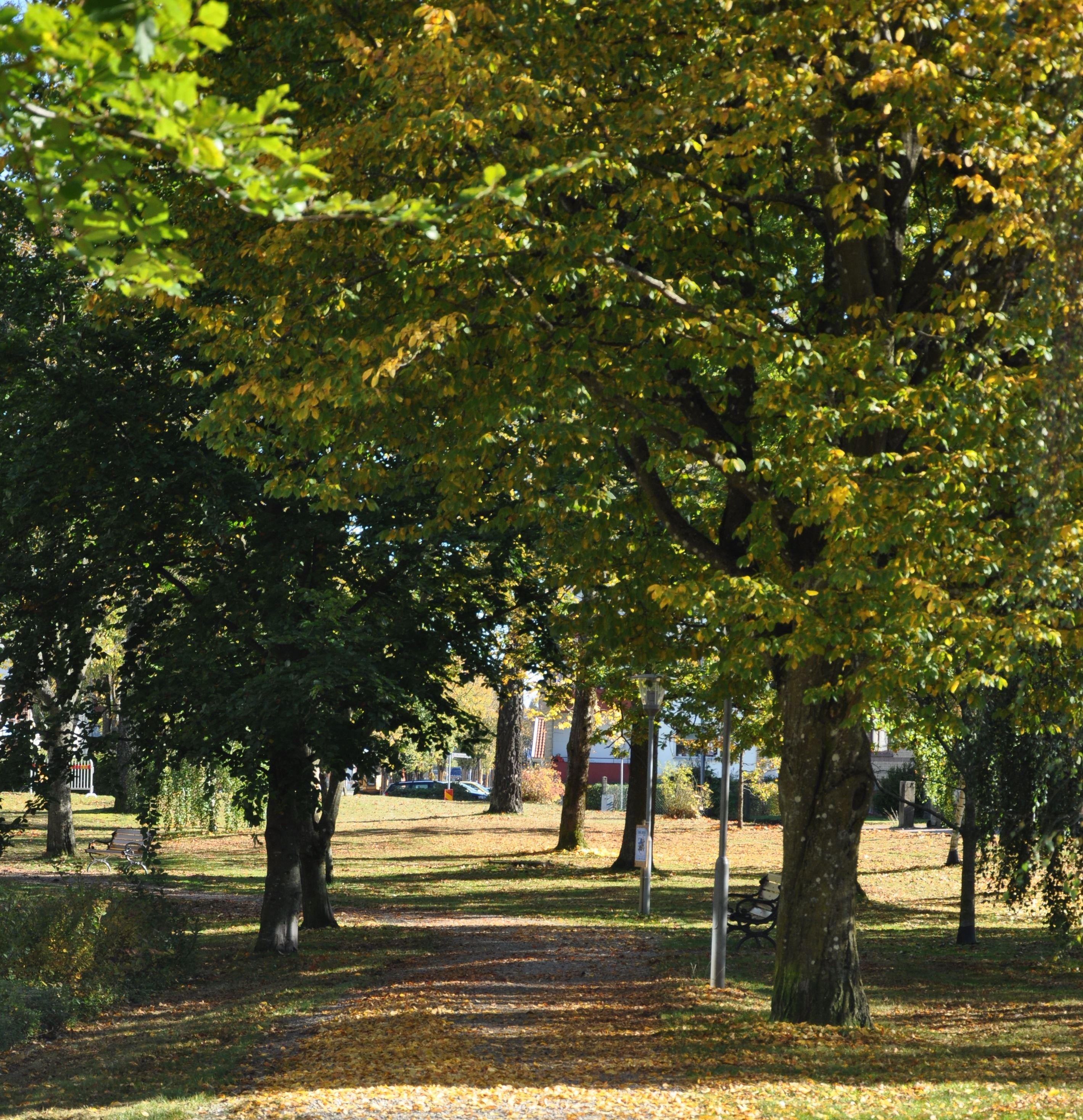 Björkparken (Der Birke-Park)