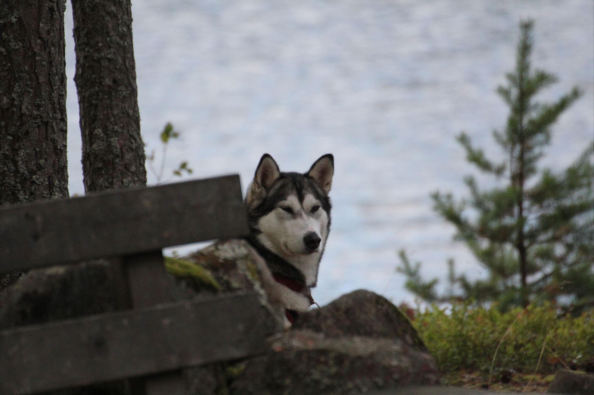Sälen Dog Adventure Hike