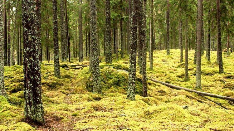 Tobias Ivarsson, Nature reserve Asa