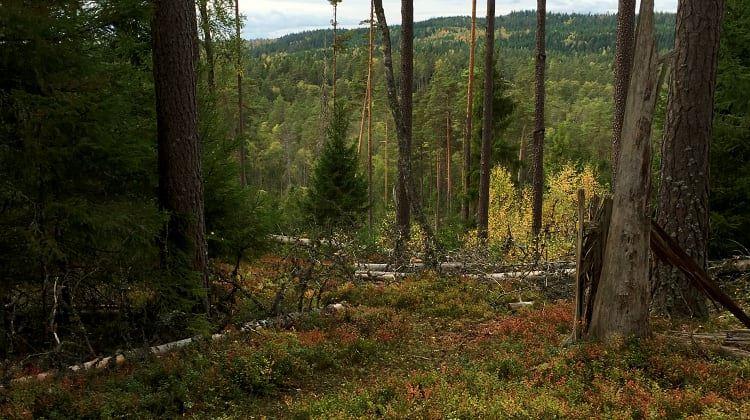 Ellen Flygare, Naturreservat Kråketorpsskogen