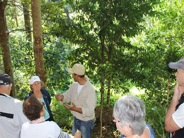 From the leaf to the root – Guided tour