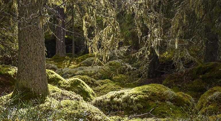 Länsstyrelsen, Naturreservat Skårtaryds Urwald