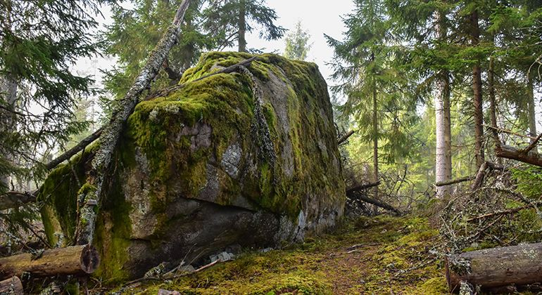 Länsstyrelsen, Naturreservat Kråketorpsskogen
